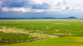 злаковик Иннер Монголиа Стоковое фото RF