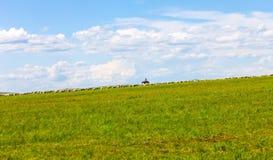злаковик Иннер Монголиа Стоковое Изображение