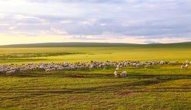 злаковик Иннер Монголиа Стоковое Изображение RF
