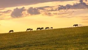 злаковик Иннер Монголиа Стоковые Изображения RF
