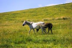 злаковик Иннер Монголиа Стоковая Фотография