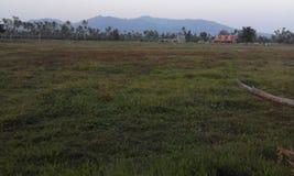Злаковик и гора Стоковая Фотография RF