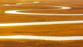 Злаковик Китая Bayinbuluke в Синьцзян стоковые изображения