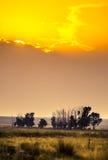 Злаковик на заходе солнца Стоковая Фотография RF