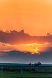 Злаковик на заходе солнца Стоковая Фотография