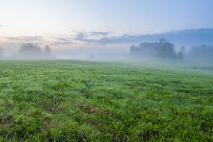 Злаковик на туманном рассвете Стоковые Изображения RF