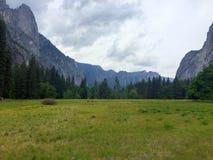 Злаковик долины Yosemite Стоковые Фотографии RF