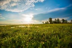 злаковик травы росы после полудня поздно естественный Стоковая Фотография RF