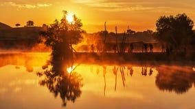 Злаковик Bashang в лете Стоковое Фото