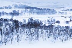 Злаковик Bashang в зиме Стоковое Фото