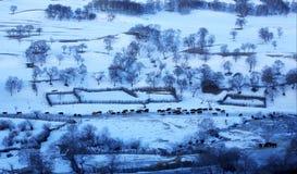 Злаковик Bashang в зиме Стоковые Изображения RF