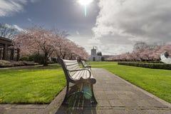 Здание капитолия положения Орегона с деревьями вишневого цвета Стоковое Фото