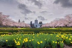 Здание капитолия положения Орегона с цветками весны стоковые изображения rf
