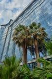 Здание пальм на заднем плане высокое стеклянное и голубое небо в облаках Стоковые Изображения RF
