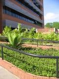 Здание университета, Puerto Ordaz, Венесуэла стоковое фото rf