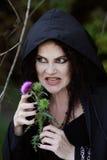 Злая ведьма Стоковые Изображения