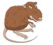 Злая крыса Стоковое Фото