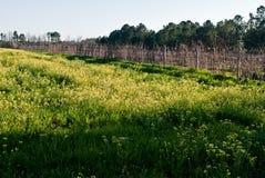 здесь весна Стоковая Фотография RF