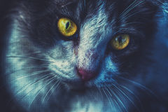 Злий кот Стоковые Фотографии RF