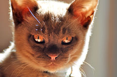 Злий маленький кот стоковая фотография rf