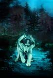 Злой волк в темном лесе стоковое изображение rf