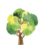 Здоровая зеленая акварель дерева Стоковое Изображение RF