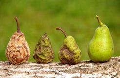 Здоровая и тухлая груша Стоковая Фотография