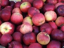 Здоровая куча яблок Стоковые Фото