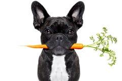 Здоровая собака еды стоковые изображения