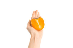 Здоровая тема еды и диеты: Человеческая рука держа половину хурм изолированных на белой предпосылке в студии, от первого лица VI Стоковая Фотография RF