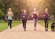 Здоровые женщины Jogging на парке с собакой Стоковое Изображение RF