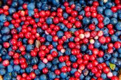 Здоровые и очень вкусные органические голубики и backgro cowberrys Стоковое Изображение
