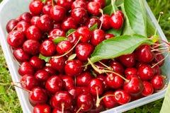 Здоровые органические вишни в пластмасовом контейнере Стоковая Фотография RF