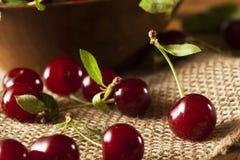 Здоровые органические кислые вишни Стоковая Фотография RF