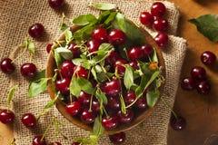 Здоровые органические кислые вишни Стоковые Фотографии RF