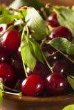 Здоровые органические кислые вишни Стоковое фото RF
