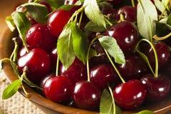 Здоровые органические кислые вишни Стоковые Изображения RF