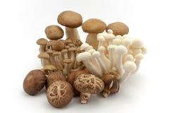 Здоровые свежие грибы Стоковые Изображения