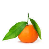 Здоровые свежие оранжевые tangerines на белой предпосылке Стоковое фото RF