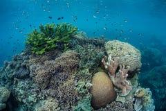 Здоровый коралловый риф 1 Стоковое Изображение RF