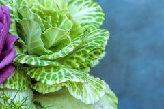 Здоровый свежий завод лист капусты с фиолетовой розой на текстурированной предпосылке Стоковая Фотография RF