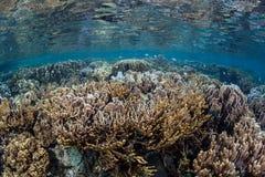 Здоровый Тихий океан риф Стоковое Изображение RF