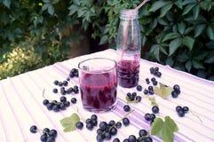 Здоровый smoothie от ягоды питья витамина blackcurrant, концепции десертов лета стоковая фотография rf