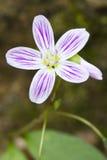 здоровье весны skincare релаксации красотки Стоковое фото RF