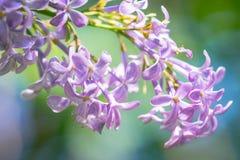 здоровье весны skincare релаксации красотки Стоковая Фотография RF