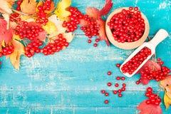 Здоровье чая с калиной Стоковая Фотография