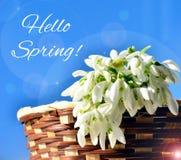 Здравствуйте! весна! Стоковые Изображения RF