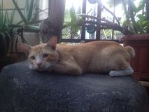 Здравствуйте! кот Стоковое фото RF