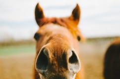 Здравствуйте! лошадь Стоковые Фотографии RF