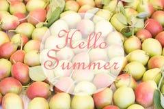 Здравствуйте! поздравительная открытка лета с много зрелых зеленых и розовых груш Стоковое Изображение RF